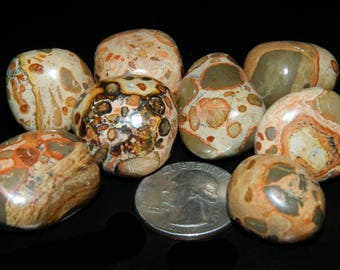 Rare Leopardite Tumbled Stones ~ Peaceful ~ Abundance ~ Protection ~ Shamanic ~ Attract New Opportunities ~ Gorgeous ~
