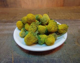 Dried Spilanthes - Toothache Plant