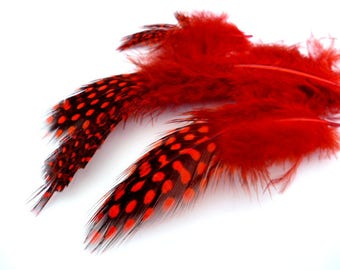 Red dyed Feathers_PP034655887/324_ Pack little red dyed point feathers of 4-12 cm/ pack 16-20 pcs