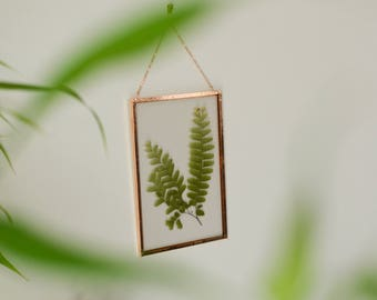 """Real pressed plant wall hanging   maidenhair fern   4x6"""" glass with copper edging   glass herbarium   botanical home decor"""