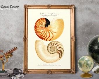 Ocean Shell Posters Aquatic Art Decor Seashell Prints Color Birthday