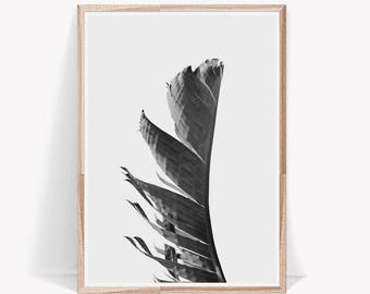 Leaf Print,Palm Leaf,Palm Leaf Print,Banana Leaf Art,Black and White,Banana Leaf Wall Art,Banana Leaf Print,Palm Leaf Art,Leaf Poster,Leaf