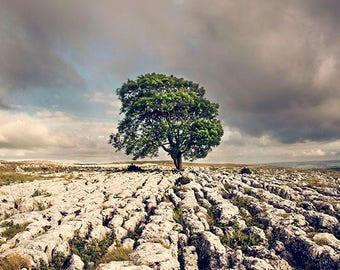 Landscape print, fine art photography, nature wall art, Yorkshire photograph, nature print, nature photography, large wall art, rosefiltered