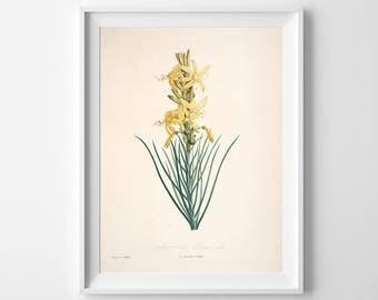Flower Nursery, Flower Art Print, Flower Wall Decor, Flower, Flower Oil Painting, Flower Watercolor, Flower Wall Art, Flower Painting, 311