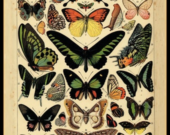 Butterflies Poster - 1895 reproduction hand-laid on canvas