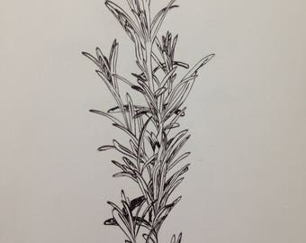 Rosemary - original ink drawing