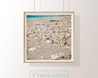 Shells, shell prints, beach, coastal, beach photography, beach art, instant download, 20x20, square print