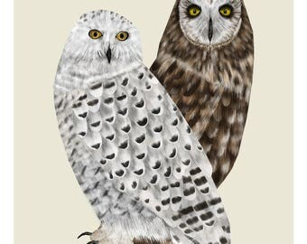 Strigidae Owls, Snowy Owl Print, Owl Print, Bird Print, Owl Illustration, Woodland Animals, Woodland Decor, Wildlife Print, Home Decor