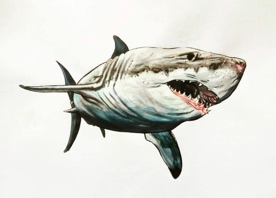 Grand requin blanc dessin aux feutres plus encre papier a3 - Requin en dessin ...
