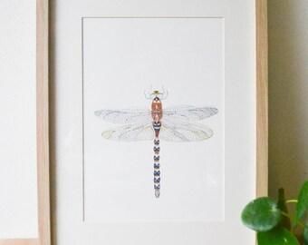 A4 Libelle (Artprint)