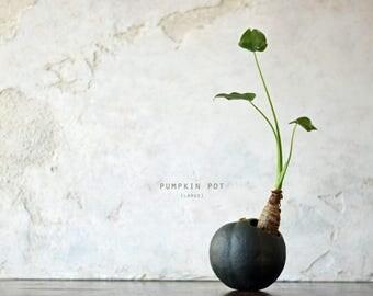 Pumpkin Pot (Large) Black