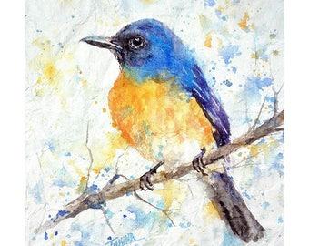 Tickells blue flycatcher