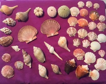 Beautiful collection of shells and sea life.