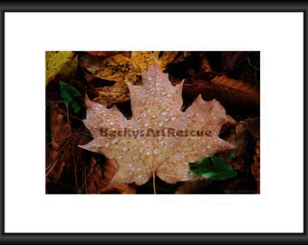 Maple Leaf, Photography, Free Shipping, Print, Framed Print, Canvas Wrap, Canvas Floating Frame, Fall, Autumn, Leaves, Wall Art, Home decor