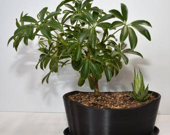 Arc Bonsai Pot and Tray