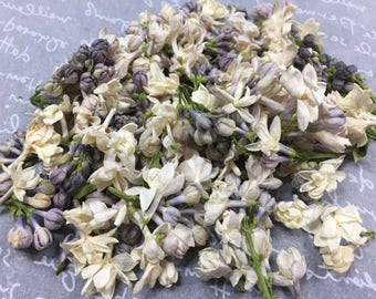 100% Real Freeze Dried White Lilac Petals (5 cups)