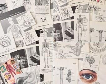 Vintage Medical Ephemera - Anatomy - Journals -Craft Paper