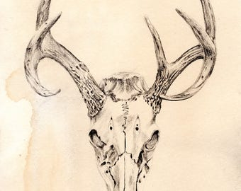 Antlers and Skull Drawing