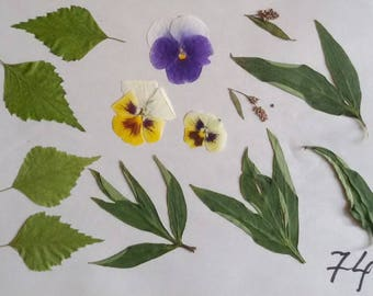 floral supplies dry herbs flower petals diy projects pressed leafs/for/craft green fern oak leafs purple petunia fairy kit pressed flower э1