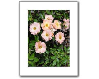 Wild Rose - Nature Prints - 11 x 14