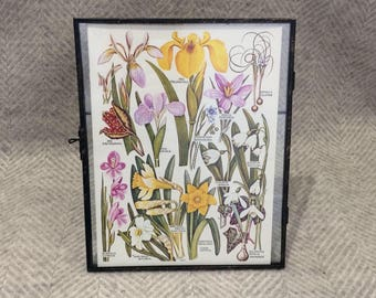 Genuine vintage framed botanical drawing, flower illustrations, botanical print, floral, in glass frame, Green leaves Pink Yellow Daffodil