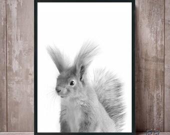 Squirrel Print, Nursery Wall Art, Squirrel Black White, Digital Download, Squirrel Poster, Kids Room Decor, Squirrel Photo, Nursery Decor