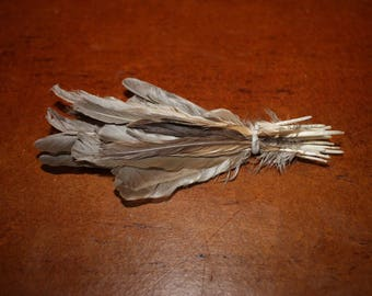 natural European Sparrow feathers (Brown)
