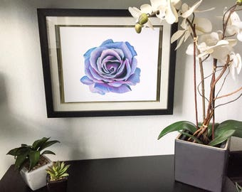 Blue and Pink Rose Drawing Print - Wall Art - Colorful Flower