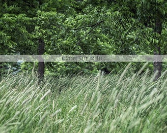 ON SALE Black Walnut Trees Country Field of Grasses Digital Background, Instant Download, Tall Grass, Portrait and Wedding Backdrop