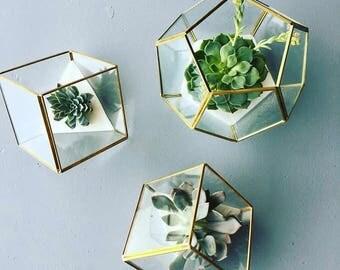Gold Cube Terrarium