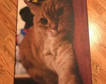 20x36 canvas of a cat i took a photo of