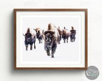 Bison Print, Bison Photography, Printable Art, American Buffalo Print, Buffalo Wall Art, North American Wall Art, Gift For Him, Buffalo Art