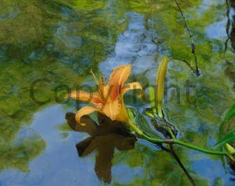 Canvas Floating Yellow Flower