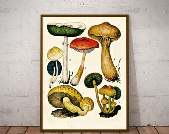 Four Vintage Prints - Gilled Mushrooms and Slime Mold - 1973 Botany Encyclopedia - Printable Art - Instant Download