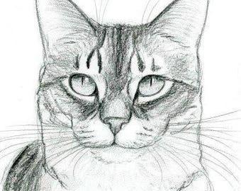 Cat Original Pencil Portrait