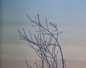 Frozen Tree Ft. Sleeping Lady