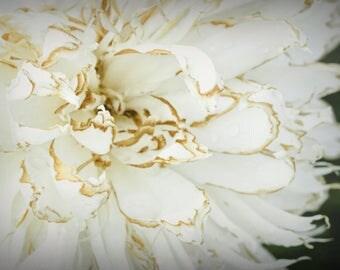 Peony Flowers Photograph Digital Download