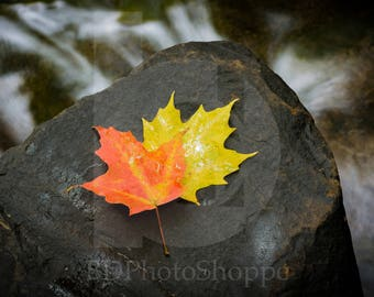 Two Leaves on a Rock | Landscape Photo Art | Nature Lover Gift | Fine Art Photography | Personalization | BDPhotoShoppe | Home Office Decor