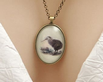 New Zealand Brown Kiwi bird, vintage art print, large oval Picture Pendant, 40x30mm, glass dome pendant, cameo