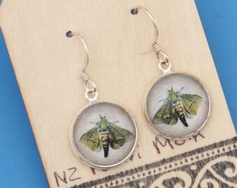 New Zealand Puriri Moth, vintage art print, Earrings, glass dome art, sterling silver earring wires