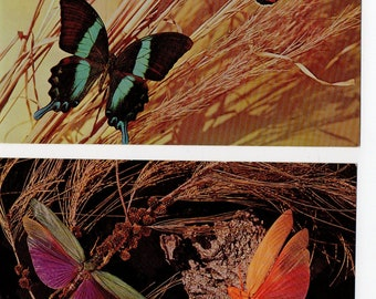 Lot of 2 Insect Postcards | Art Butterfly, Locusts, Cicada, Moth, Tropical, Museum, Photograph Card, Nature, Entomology | Paper Ephemera