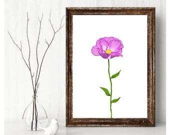 Instant Download Pink Wildflower Original Photoshop Illustration