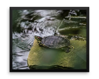 Beautiful Framed Turtle Poster