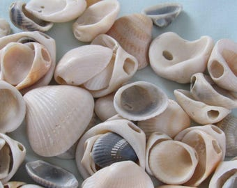 Pre-Drilled Beach Shells, Hand picked from the beach, Make your own Seashell Mobile or Jewelry, Mermaid Party Crafts, Under the Sea Theme