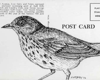 Brown Thrasher - Ink drawing on vintage post card by Mr. Hooper of Nashville, Tennessee