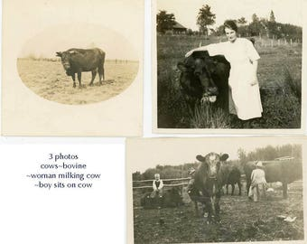 vintage snapshot 1920 COW Bovine lovers 3 photo lot of Woman Child