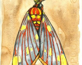 Regal Moth King