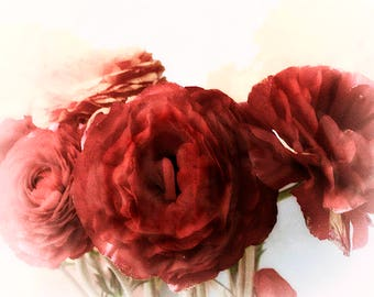 Red Ranunculus Flower Photography, Floral Art Print, Red  Flower Wall Art
