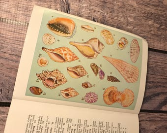 Shells of the Florida Coast - Educational Field Guide - Plus a postcard and letter tucked inside!