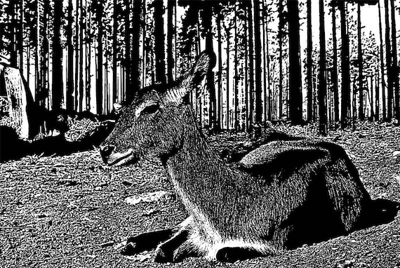 baby deer fawn forests trees printable art black and white Digital Image Download graphics jpg png ink style illustration nature artwork